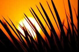 Oracle will Sun übernehmen - geht es dabei nur um MySQL?